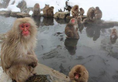programlehetosegek-makako-kiem