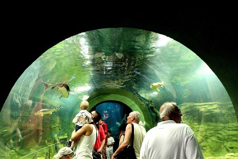 Tisza-tavi Ökocentrum és Vízi Sétány